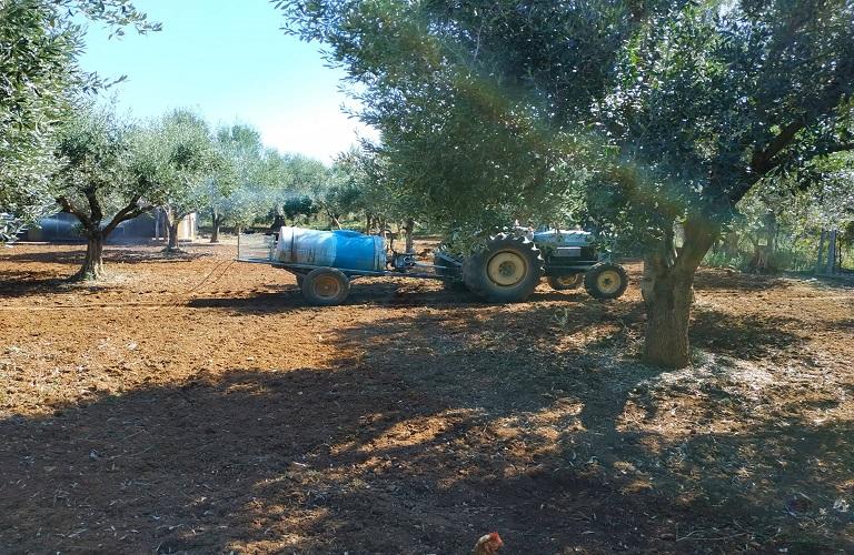 Ψεκασμοί καλύψεως για δάκο και μυκητολογικές προσβολές