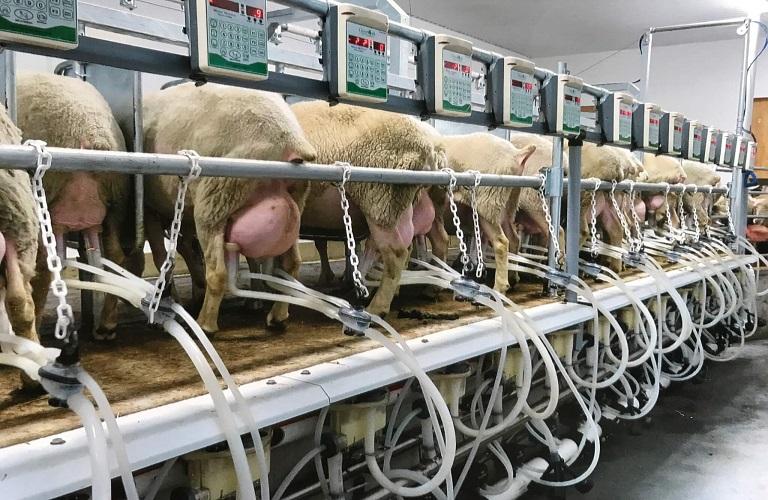 Ολοκληρωμένη υποστήριξη για τις Δηλώσεις Παράδοσης Γάλακτος