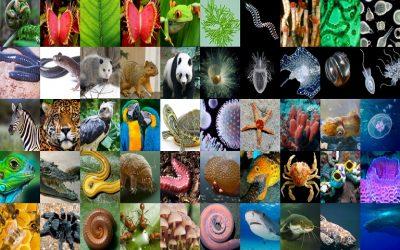 Κέντρο Γνώσης για τη βιοποικιλότητα