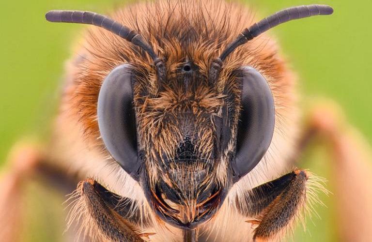 Η μείωση του πληθυσμού των μελισσών και των άλλων επικονιαστών