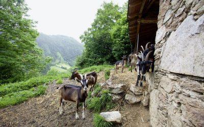 Σπάνιες φυλές: πληρωμή2ης εκκαθάρισης