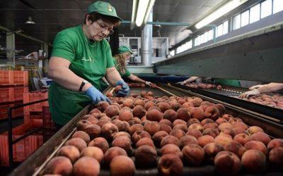 Μεταποίηση γεωργικών προϊόντων, με επιπλέον 28 εκατ. ευρώ