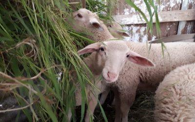 Ενεργοποιείται η Επιτροπή Ελέγχων για την ασφάλεια τροφίμων, ζωοτροφών και την υγεία των ζώων