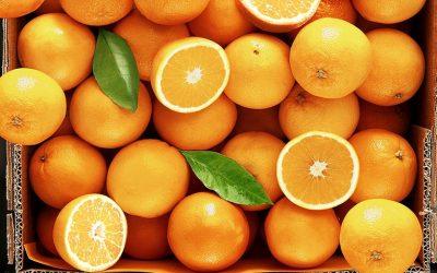 Η Συνδεδεμένη στα προς χυμοποίηση πορτοκάλια