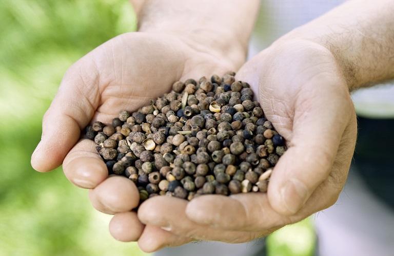 Διαθέσιμοι Βιολογικοί Σπόροι Σποράς