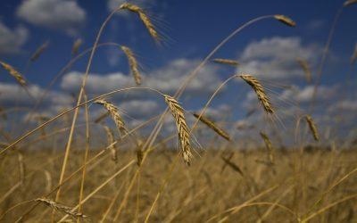 Εισροές και εκροές σε γεωργία – κτηνοτροφία: Νοέμβριος 2020