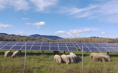 Aγροβολταϊκά:  κρέας και ηλεκτρικό ρεύμα από την ίδια πηγή